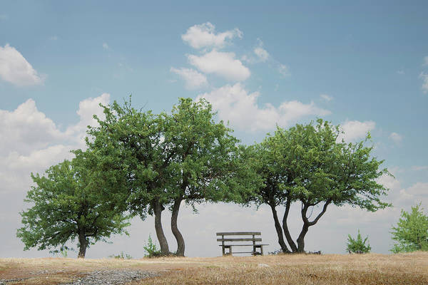 Photograph - Park Bench And Trees, Meteora, Greece by Ed Freeman