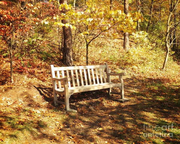 Wall Art - Photograph - Park Bench by Emily Kelley