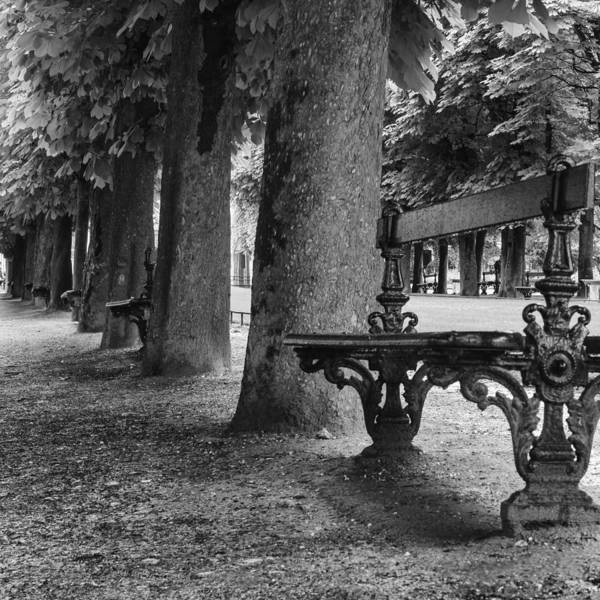 Wall Art - Photograph - Park Bench In Paris by Georgia Fowler
