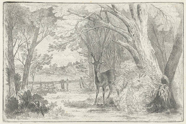 Hoof Drawing - Park Landscape With Deer by Jan Bos Wz.