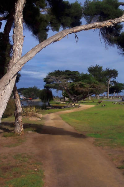 Monterey Park Photograph - Park Pathway by Art Block Collections
