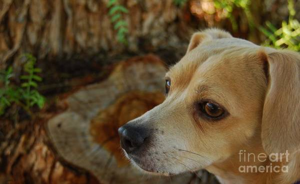 Dog Biscuit Photograph - Park Ranger Princess Betty by Angela J Wright