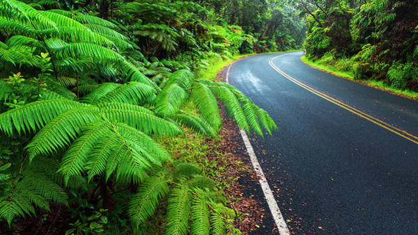Wall Art - Photograph - Park Road Through The Fern Forest by Russ Bishop