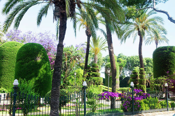 Stoney Photograph - Park Scene In Cadiz, Spain With Palm by Jan and Stoney Edwards