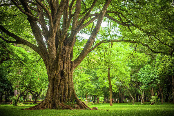 Karnataka Photograph - Park by This Is Captured By Sandeep Skphotographys@gmail.com