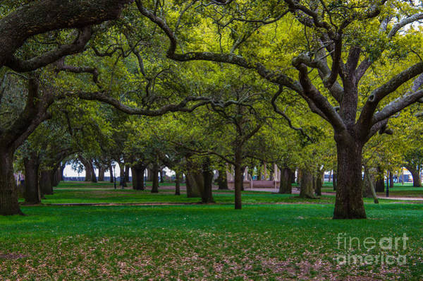 Photograph - Park View by Dale Powell
