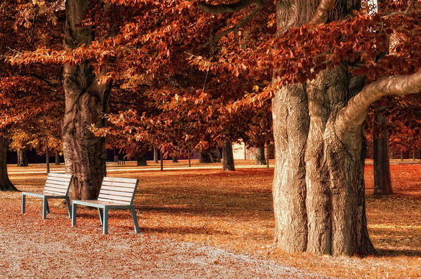 Boulevard Photograph - Park With Beech Trees In Autumn by Kerrick