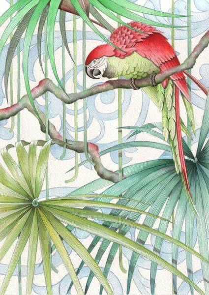 Tropical Drawing - Parrot, 2008 by Jenny Barnard