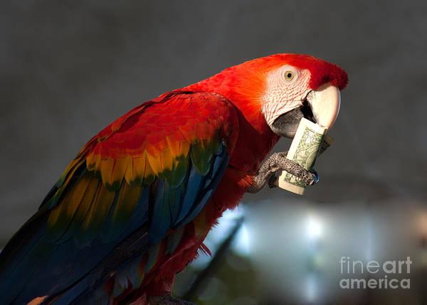 Photograph - Parrot Eating 1 Dollar Bank Note by Gunter Nezhoda