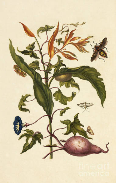 Photograph - Parrot Flower Moths Mesquite Bug by Getty Research Institute