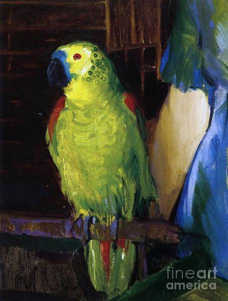 Blue Dress Painting - Parrot by George Wesley Bellows