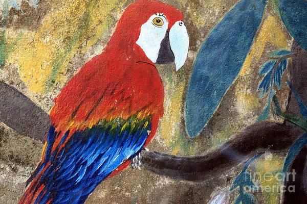 Wall Art - Photograph - Parrot Graffiti by Sophie Vigneault