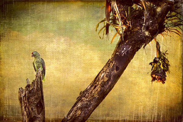 Photograph - Parrot In Paradise by Peggy Collins