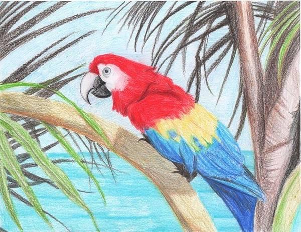 Blue Parrot Drawing - Parrot by Katie Essman