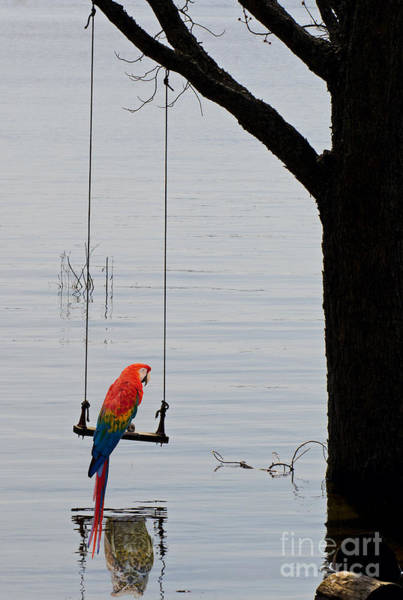 Photograph - Parrot On A Swing by Les Palenik