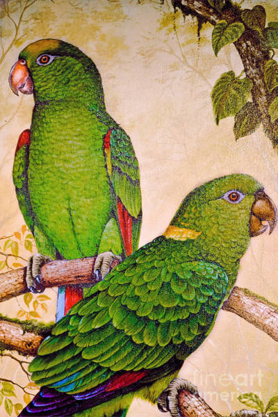 Photograph - Parrot Popularity by Gary Keesler