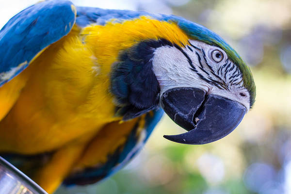 Photograph - Parrot by Randy Bayne