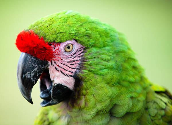 Photograph - Parrot by Sebastian Musial