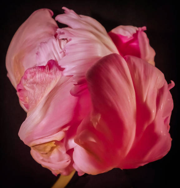 Passionate Photograph - Exotic Passion by Karen Wiles