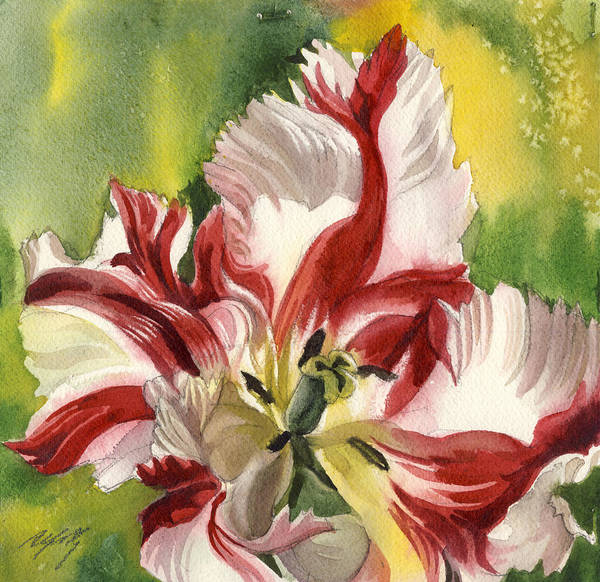 Painting - Parrot Tulip With Green by Alfred Ng