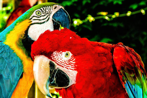 Photograph - Parrots Can Talk by Louis Dallara