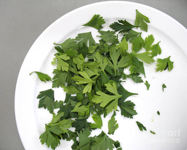 Photograph - Parsley On A Plate by Gerald Grow