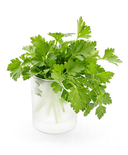 Parsley Photograph - Parsley On White  by Elena Elisseeva