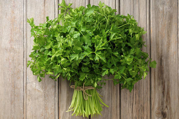 Wood Photograph - Parsley by Riou