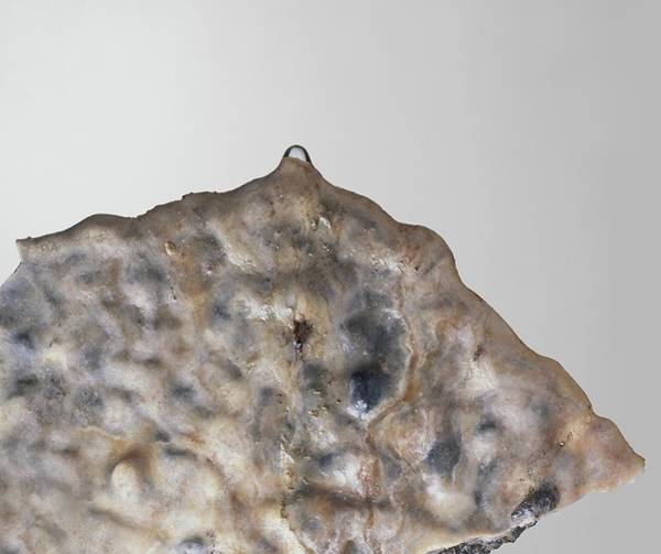 Carbonate Photograph - Part Of A Stalactite by Dorling Kindersley/uig