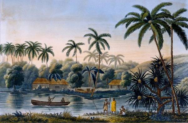 Tropical Drawing - Part Of The Village Of Matavae, Coconut by French School