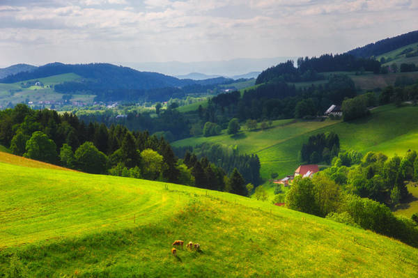 Photograph - Partly Sunny At Black Forest by Shuwen Wu