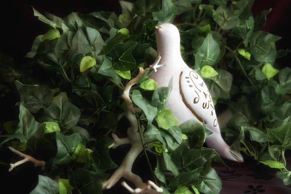 Ceramic Photograph - Partridge In The Ivy by Tom Mc Nemar