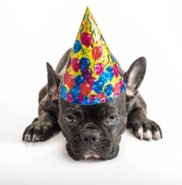 Buldog Photograph - Party Dog by Dobromir Dobrinov