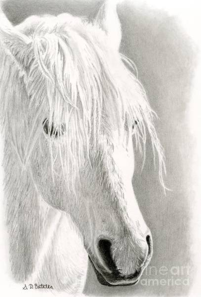 White Horse Wall Art - Drawing - White Horse- Paso Fino by Sarah Batalka