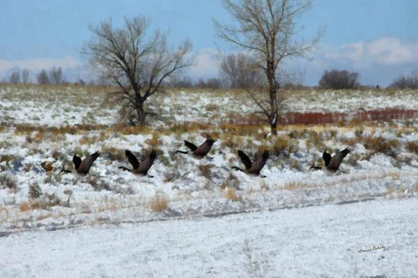 Colorado Wildlife Digital Art - Passing Through 2 by Ernie Echols