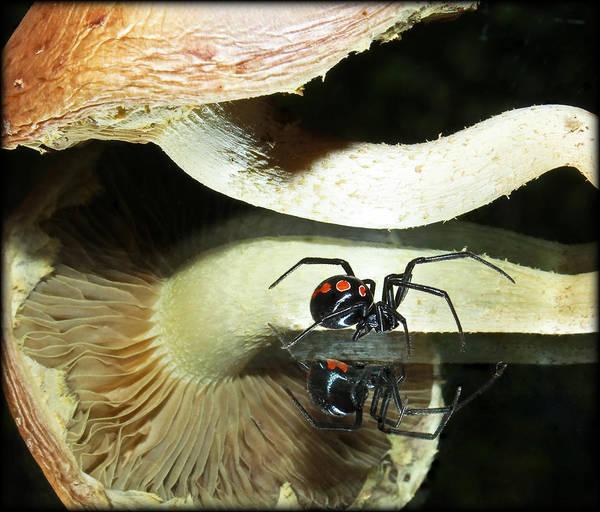 Shrooms Photograph - Passing Widow... by Tammy Schneider
