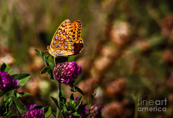 Passion Butterfly Photograph - Passion Butterfly by Robert Bales