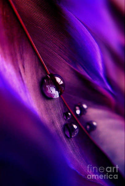 Exquisite Photograph - Treasures Within by Krissy Katsimbras