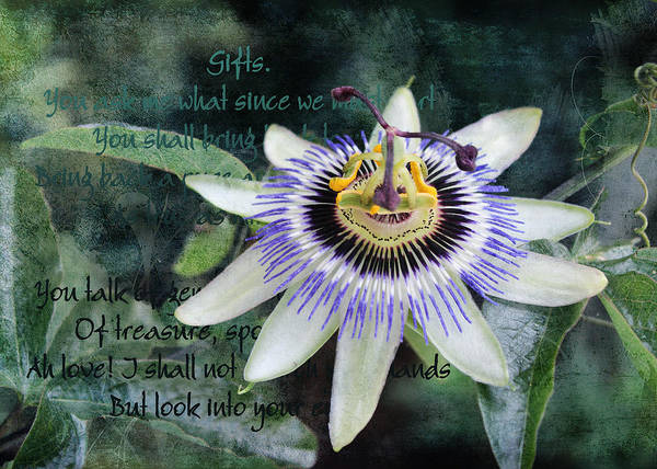 Digital Art - Passion Flower 2 by Helene U Taylor