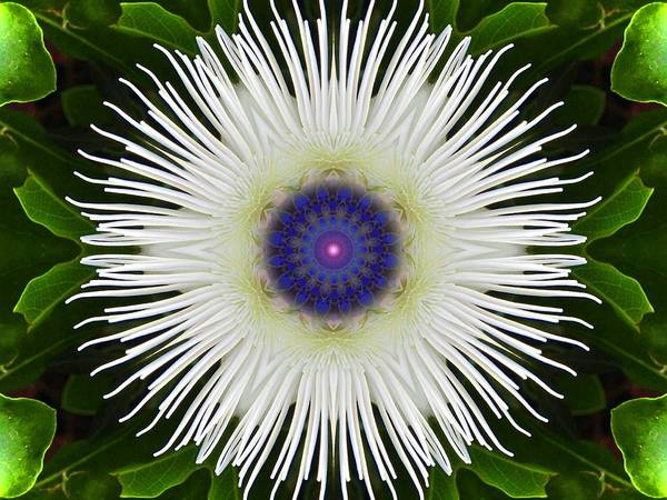 Passion Flower Portal Mandala Art Print