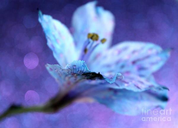 Amaryllis Photograph - Passion by Krissy Katsimbras