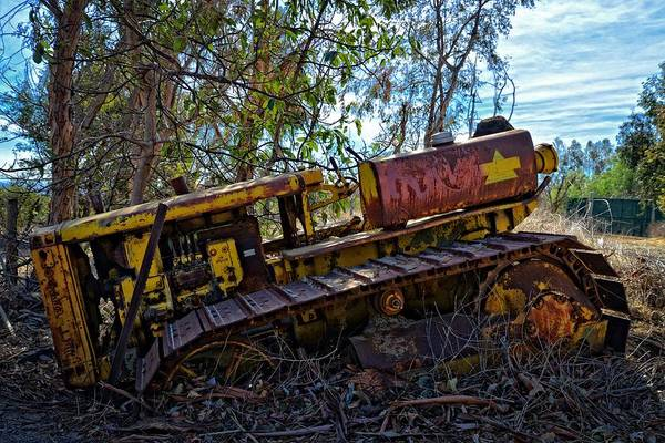 Photograph - Past It's Prime by Lynn Bauer