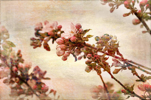 Photograph - Pastel Blossoms In Spring by Peggy Collins