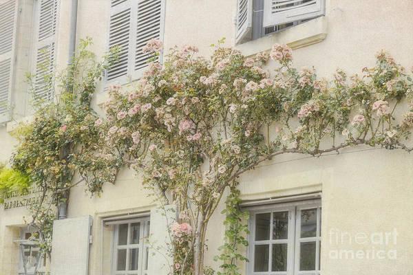 Photograph - Pastel Climbing Roses by Elaine Teague