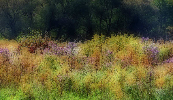 Photograph - Pastel Field by Vickie Szumigala