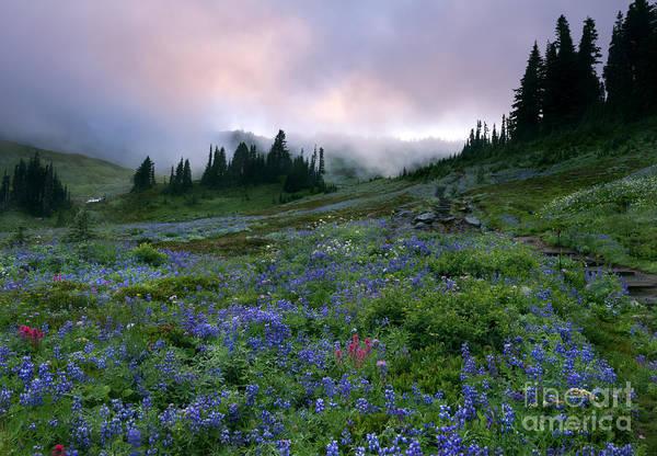 Alpine Meadows Photograph - Pastel Mountain Dawn by Mike Dawson
