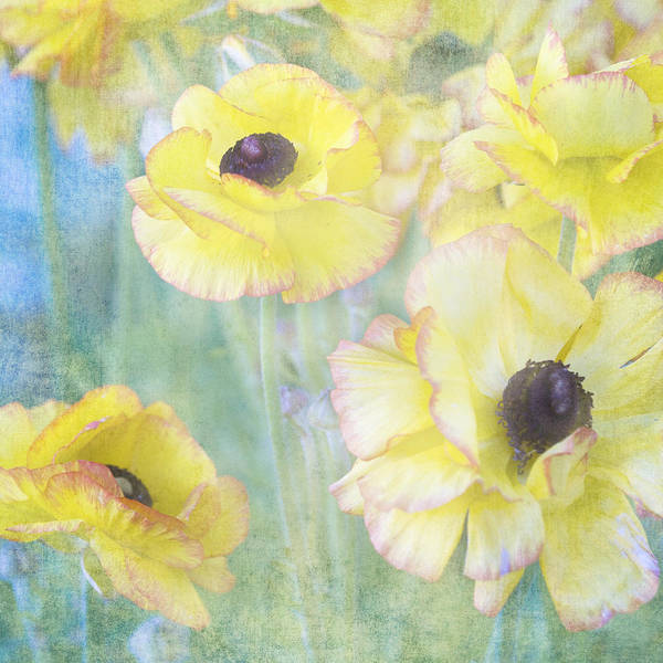 Photograph - Pastel Perfection by Renee Hong