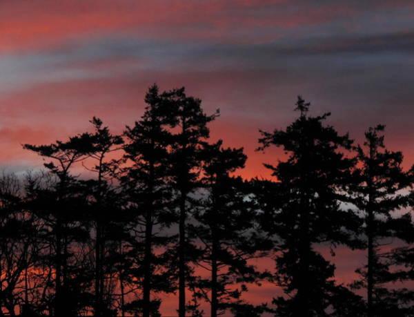 Photograph - Pastel Silhouettes by Suzy Piatt