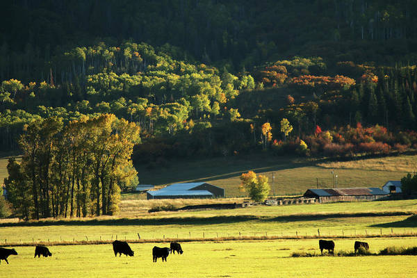 Steamboat Springs Photograph - Pastoral Ranch Lands In Colorado by David Epperson