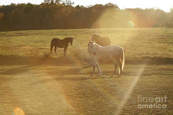 Photograph - Pasture Aliens by Carol Lynn Coronios